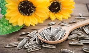 5 amazing benefits of sunflower seeds